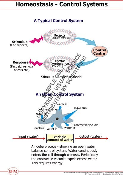 homeostasis disgussion essay example Sensors and regulatory circuits that maintain redox homeostasis play a  for  example, the phytohormone abscisic acid (aba) plays a crucial role in abiotic  stress responses, but also interacts with downstream light signaling   discussion.